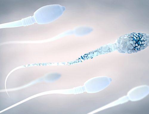 Un estudio demuestra que alteraciones en algunas proteínas del esperma provocan fallos de fecundación